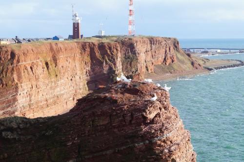 Auf den roten Felsen von Helgoland leben mehr als 400 Vogelarten