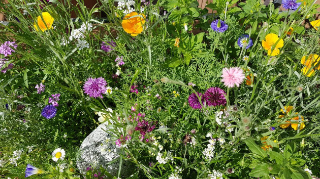 Bild - bienenfreundliche Blumenwiese